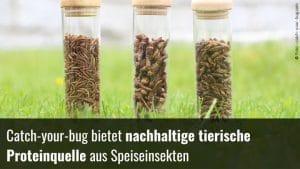 Proteinquelle Insekten